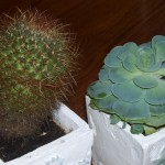 cacti 100_0976